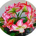 Amaryillis Flower Ring by Allan  Hughes