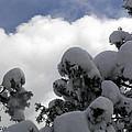 Amazing Arizona Winter Skies by Sylvia Bielefeldt