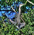 Amazing Heron by Tap On Photo
