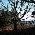 Amazing Tree by Tracy Fusco