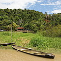Amazon Homestead by Robert Selin