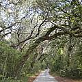 Amelia's Canopy by Patricia Williams