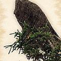 American Bald Eagle In Tree by Dan Friend