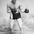 American Boxer, C1912 by Granger