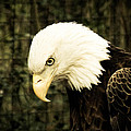 American Eagle by Trish Tritz