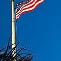 American Flag Flying Over The Palms by Roger Wedegis