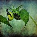 American Goldfinch II by Sandy Keeton