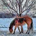 American Paint In Winter by Jeff Kolker