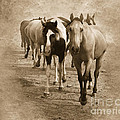 American Quarter Horse Herd In Sepia by Betty LaRue
