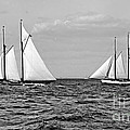 America's Cup Contenders Idler And Hildegarde 1901 Bw by Padre Art