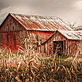 America's Small Farm by Randall Branham