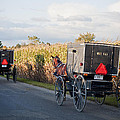 Amish Buggies October Road by David Arment