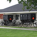 Amish Buggies Parked by Dennis Pintoski