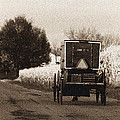 Amish Buggy And Wagon by David Arment
