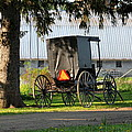 Amish Buggy by Beverly Kobee