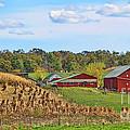 Amish Cornfield by Jack Schultz