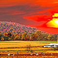 Amish Farm Sundown by Randall Branham