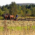 Amish Farming by David Lee Thompson