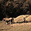 Amish Hay Wagon by Tom Mc Nemar