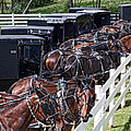 Amish Parking Lot by Tom Mc Nemar