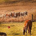 Amish Transportatin All Sizes by Randall Branham