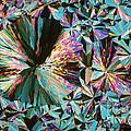 Ammonium Nitrate by Michael W. Davidson