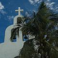 Among The Palms by Barry Doherty