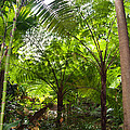 Among The Tree Ferns by Bob and Nancy Kendrick