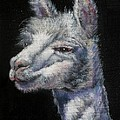 Amorous Alpaca by Shirley Leswick