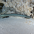 An American Eel Prowls Along The Edge by Michael Wood