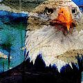 American Bald Eagle by Carrie OBrien Sibley