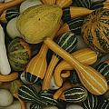 An Assortment Of Gourds by George F. Mobley