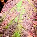 An Autumn's Leaf by Maria Urso
