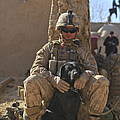 An Ied Detection Dog Keeps His Dog by Stocktrek Images