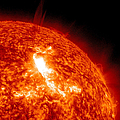 An M8.7 Class Flare Erupts On The Suns by Stocktrek Images
