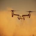 An Mv-22 Osprey Aircraft Blows Dust by Stocktrek Images