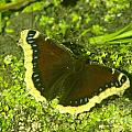 An October Butterfly  by Jeff Swan