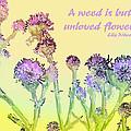 An Unloved Flower by Ian  MacDonald