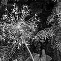 Anatomy Of A Flower Monochrome by Steve Harrington