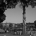 Ancient Cedars And Tombstones by Kathy Clark