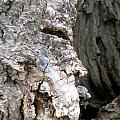 Ancient Rock Cliff Face At Rockwood Conservation Area  by Inspired Nature Photography Fine Art Photography