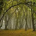 Ancient Wood Pasture by Bob Gibbons