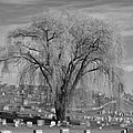 And The Willow Tree Weeps by Barbara S Nickerson