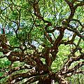 Angel Oak by Matthew Trudeau