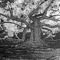 Angel Oak by Stefan Duncan