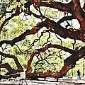 Angel Oak Tree 2 by Donna Bentley
