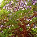 Angel Oak Tree1 by Donna Bentley