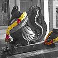 Anna Pakshi by Usha Shantharam