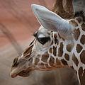 Another Giraffe by Ernie Echols