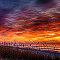 Another Perfect Morning by Dennis Dame